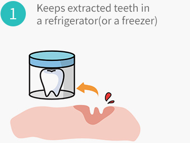 Keeps extracted teeth in a refrigerator(or a freezer)